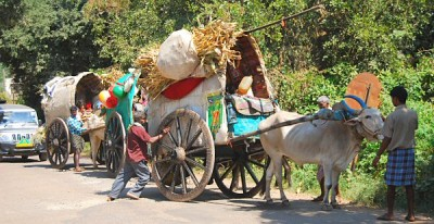 Bullock carts on the road