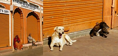 Jaipur walking 3